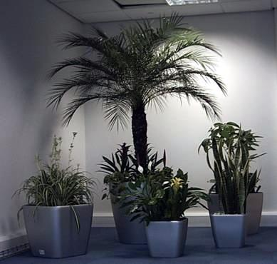 Inspiration 25 Office Plants For Sale Inspiration Design Of 25