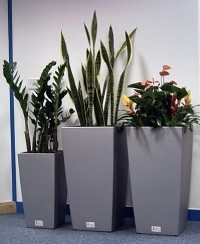 Tall Square planted displays